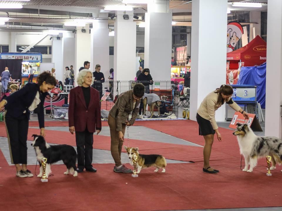 Zagreb 2017: Indy 1°BEST IN SHOW GIOVANI