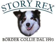 Story Rex Border Collie