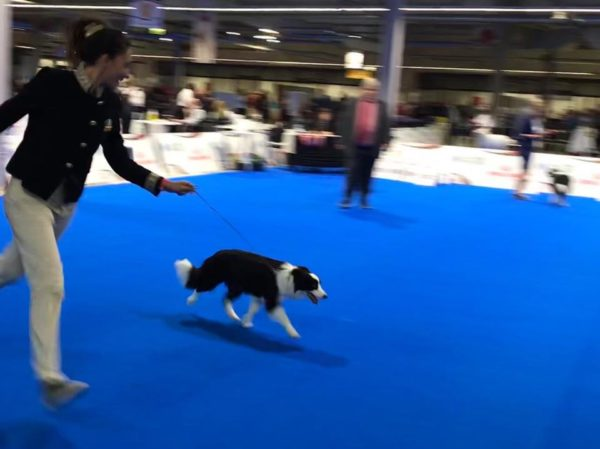 European Dog Show 2018: Kalì New European Future 2018!!!